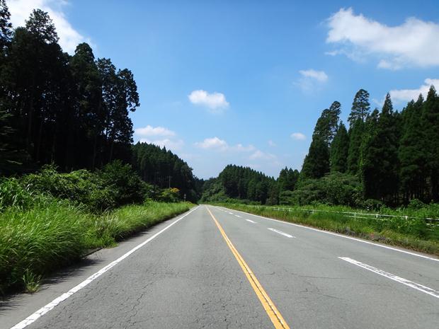 11 小国杉に囲まれて走る.JPG
