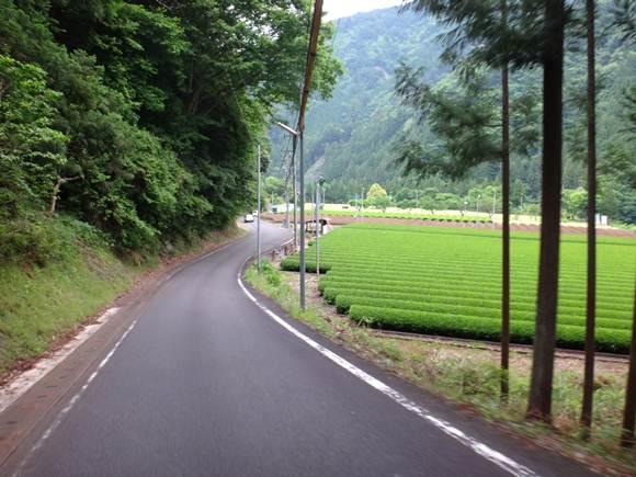 12 土地さえあれば茶畑パターン.JPG