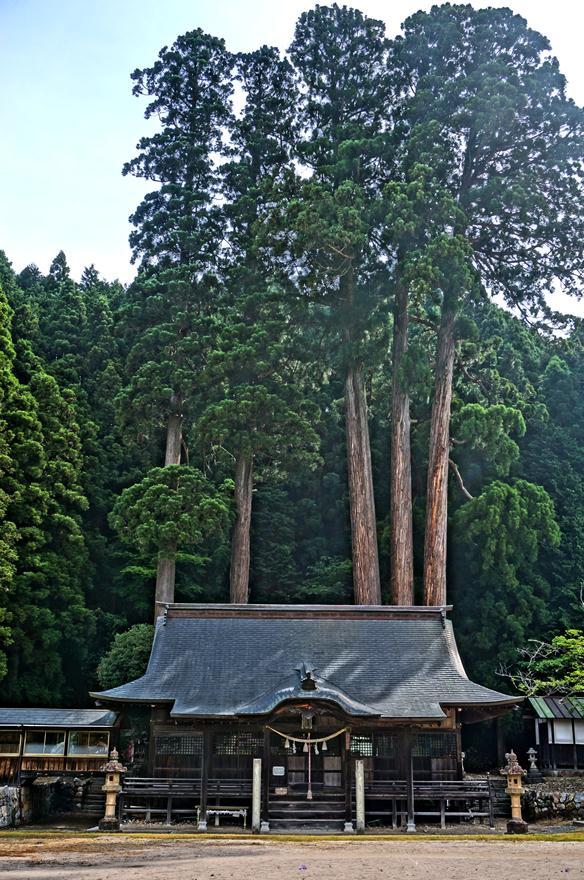 14 神社の神木かな.JPG