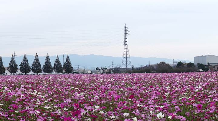 14 花の密度がすごいです.JPG