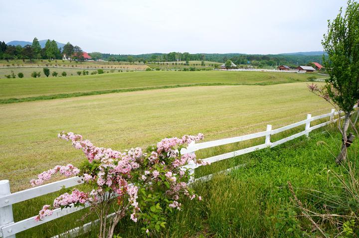 16 蒜山の牧場.JPG