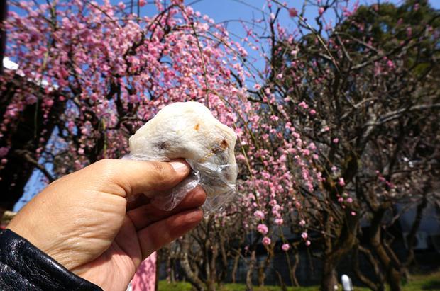 19 梅を見ながら本場の梅が枝餅.JPG