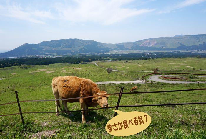 19 赤牛は美味しい.jpg
