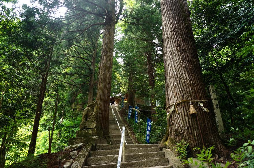 28 樹がでっかい.JPG