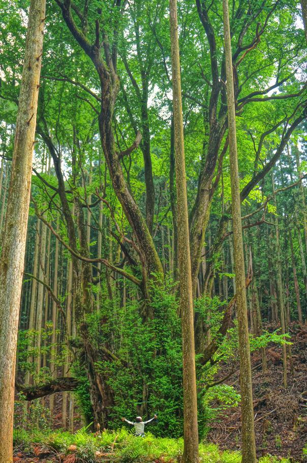 31 巨木以上の巨木.JPG
