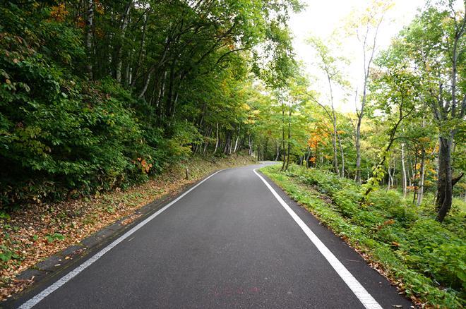 3 綺麗な林道.JPG