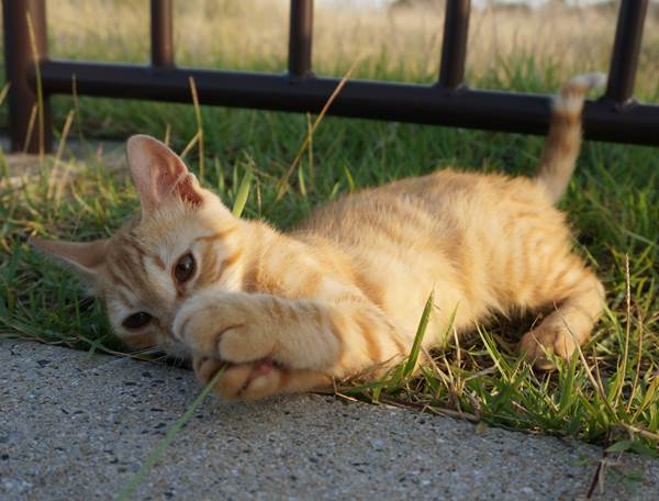 59 海辺の猫.JPG
