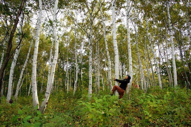 6 九州人には萌える木です.JPG