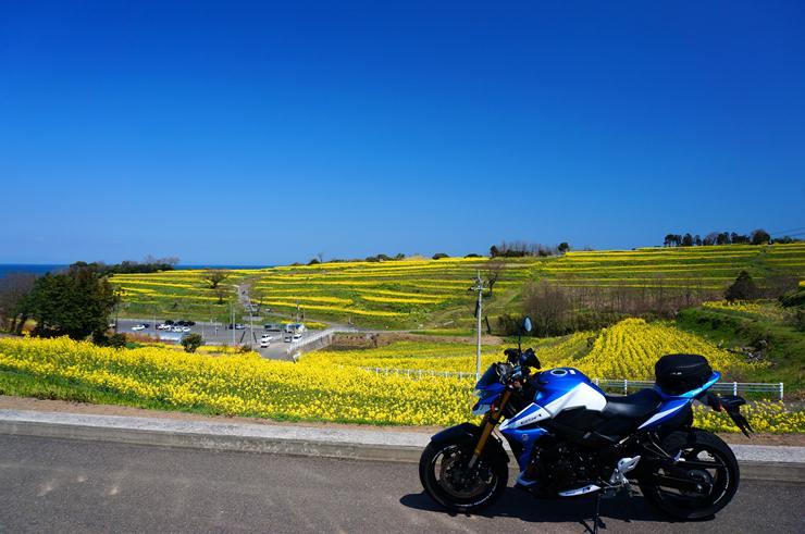 9 お花の楽園.JPG