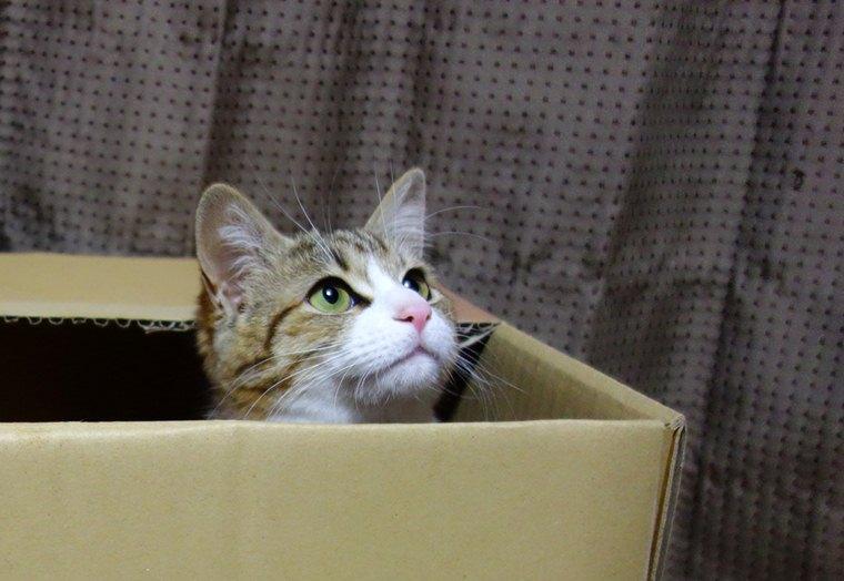 A 箱猫柚子.JPG