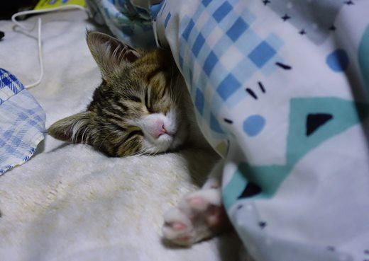一緒に寝る.JPG