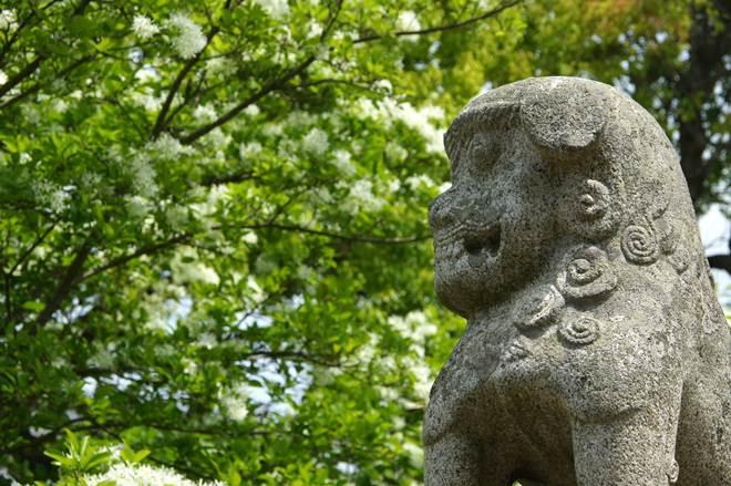 岡湊神社の狛犬.JPG
