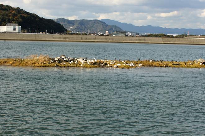 河口の洲.JPG