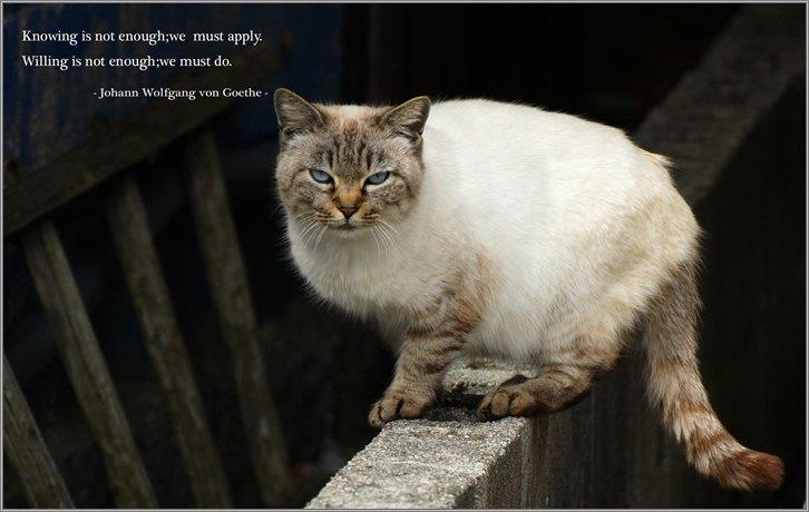 美猫さん.jpg