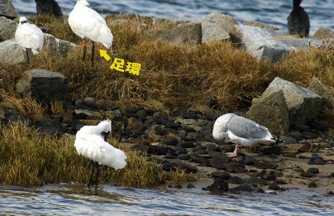 調査対象の鳥.jpg