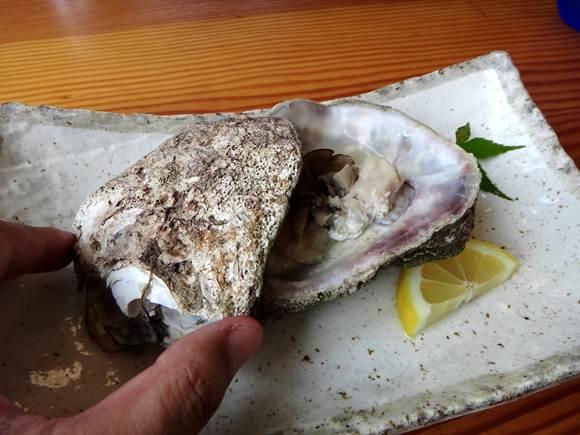 19 殻が巨大だった岩牡蠣.JPG