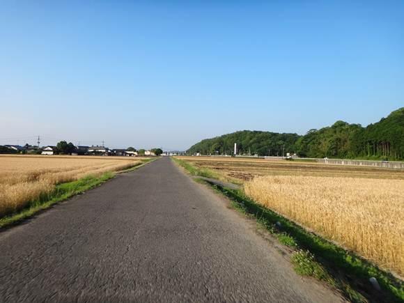 27 宇佐のまくり用の農道.JPG