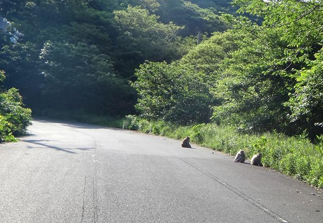 8 サルがいっぱい.JPG